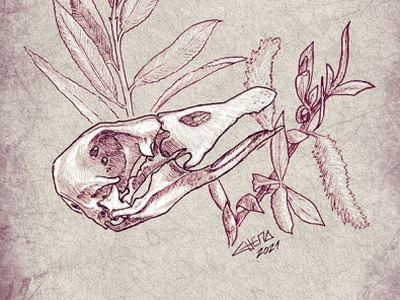Goose personalproject illustration lineart goose willow skull