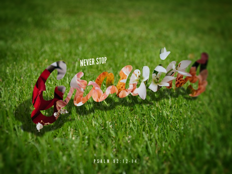 Never Stop Growing typography growing faith verse daily flowers