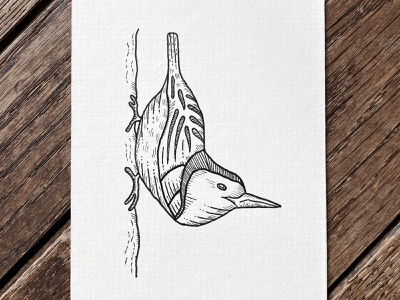 White-breasted Nuthatch sketch crosshatch nature pen doodle illustration indianaartist penandink drawing ink