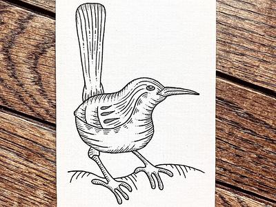 Carolina Wren wildlife nature feederbird bird penandink indiana illustration sketch ink drawing