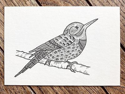 Northern Flicker dennisgood feederbird flight animals indiana outdoors nature flying wildlife bird