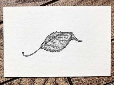 Dry Leaf illustration doodle fineline linework shading stipple drawing sketch penandink outdoors indiana autumn nature tree leaf fall