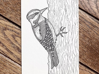 Downy Woodpecker micronpen techpen fineliner penandink illustration wildlife contour drawing bird contourhatching crosshatch drawing ink