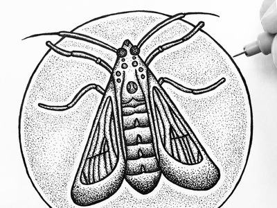 Wasp moth stipple sky pen outdoors night nature moth ink drawing design