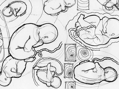 Sketches Embryo / Fetus