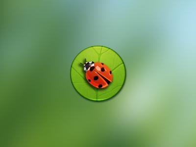 Ladybird ladybird icon circle