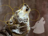 Wolftech Logo
