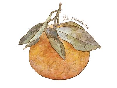 La mandarina illustration mandarina fruit