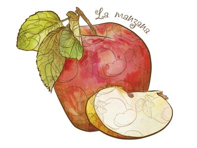 La manzana fruits illustration apple