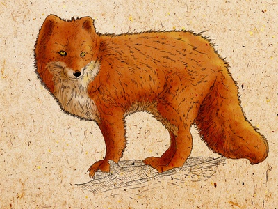 Lonely Fox digital painting children book illustration hatching