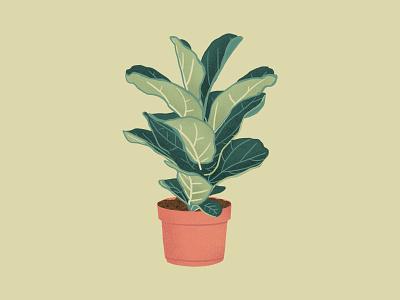 Fiddle Leaf Fig green texture procreate illustration