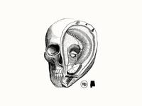 Oyster Skull - MPO