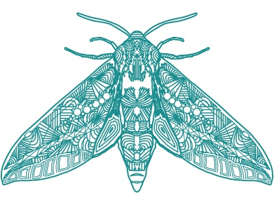 Cold Moth pattern vector insect moth cold ice sound