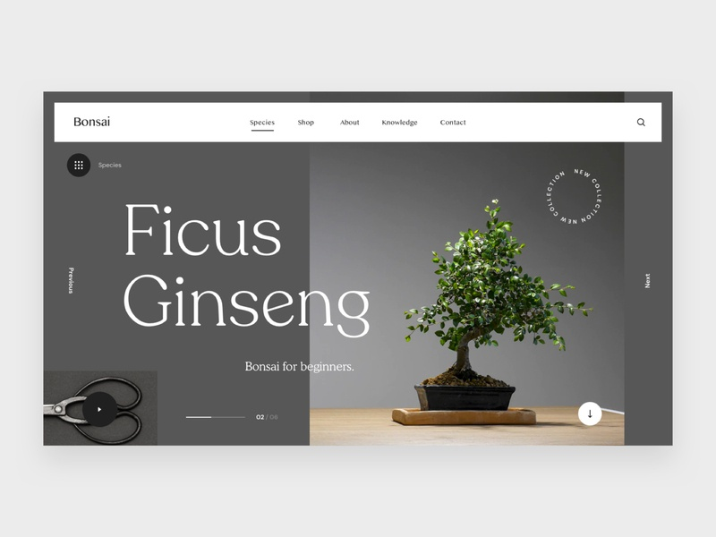 Bonsai typography website concept ui interface flat webdesign clean homepage design