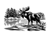 Moose in the Wild - i2i Art Inc. - ©Gary Alphonso