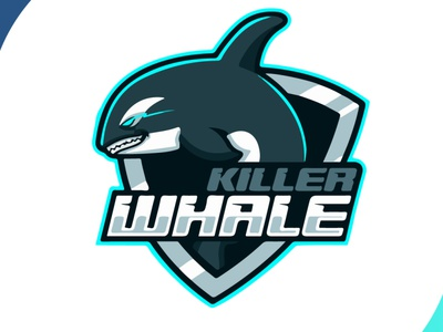 killerwhale branding design creative design creativity creative whale team logo brand identity brand design shark icon brand mascot design design art vector logo illustration flat design branding art