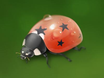 Ladybird ladybird ladybug insect pentagram icon
