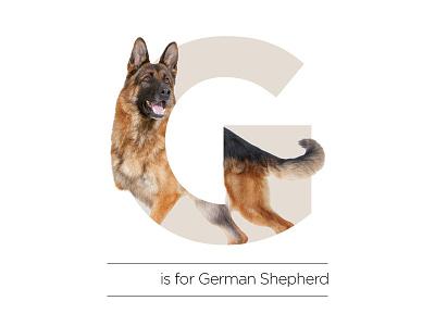 G is for German Shepherd alphabet shepherd german dog g