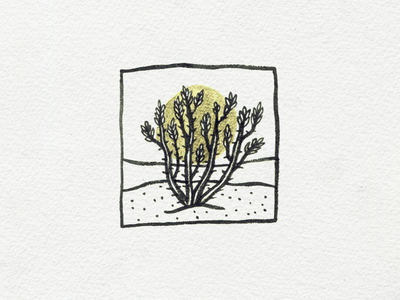Vine halo ink illustration succulent desert vine ocotillo