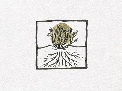 Vine & roots halo ink illustration succulent desert roots vine ocotillo