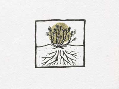 Vine & roots halo ink illustration succulent desert roots vine ocotillo
