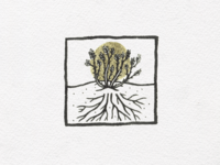 Vine & roots