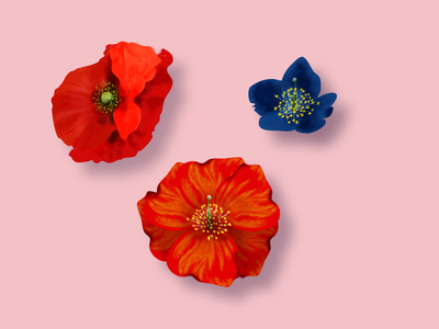 Flowers plant illustration ui artist webdesigner branding webdesign floral poppy flower design