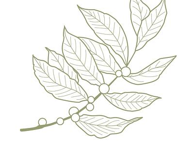 Coffee Plant Illustration illustration
