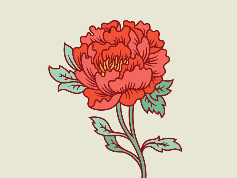 Peony peony flower floral illustration flora nature modify ink