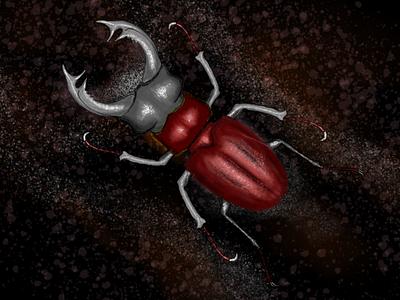 Stagbeetle affinity animal illustration