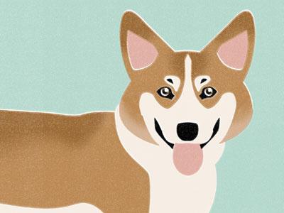Corgi dog illustration animal corgi texture puppy
