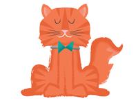 Dexter my Cat