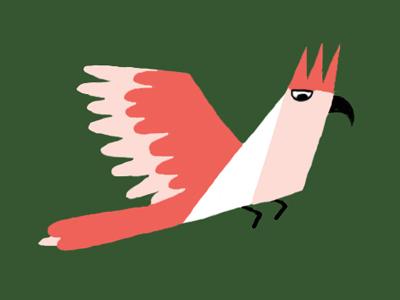 Dribbble   cockatoo