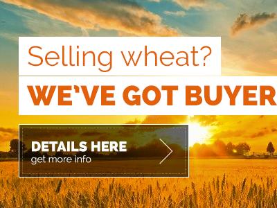 Wheat wheat design trade
