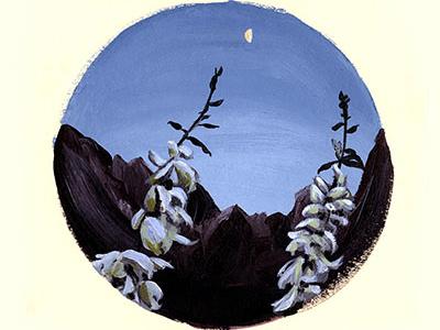 Zion Yucca