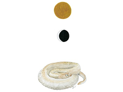 Serpent Day 1 illustration watercolor drawing myth symbols sun moon snake serpent crescent