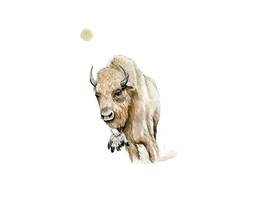 White Bison watercolor illustration hand bison buffalo moon feathers