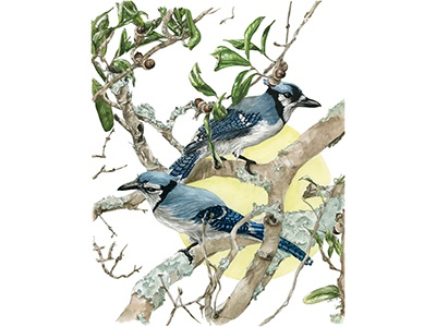Blue Jays watercolor nature sun botanical birds