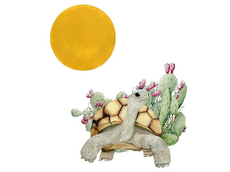 Tortoise for Afterhours Poster Show southwest cacti cactus watercolor sun animals wildlife desert tortoise poster