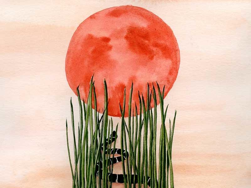 Tall Grass tarot deck tarot watercolor pink green red sun serpent snake grass