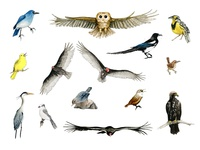 Our National Parks: Birds
