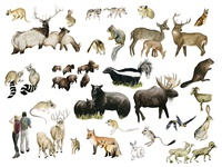 Our National Parks: Mammals