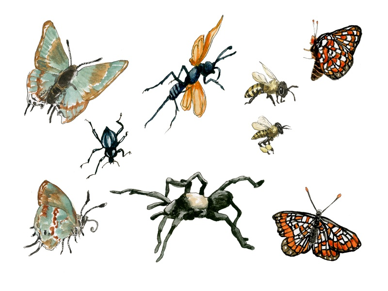 Insect assets2