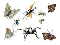Our National Parks: Insects