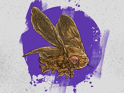 """Арт-проект """"насекомые"""" design digitalart poster art comics illustration"""