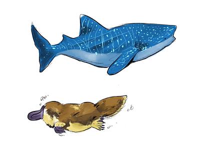 Whale Shark & Platypus ipad pro whale shark procreate illustration platypus