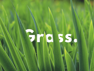 Grass. hidebehind layers typography text grass