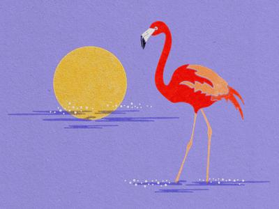 Flamingoooooooo