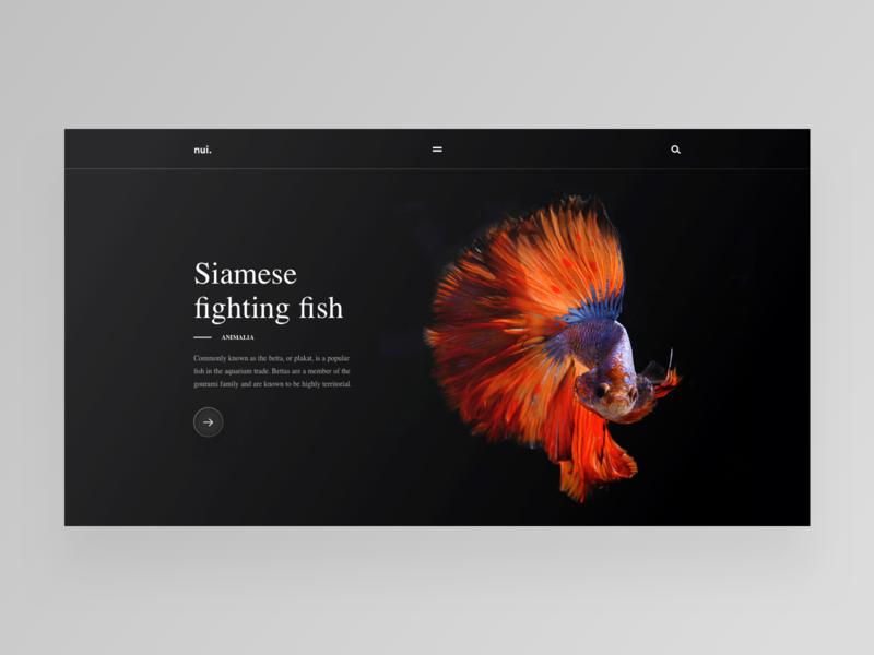 Siamese fighting fish animal national geographic fighting fish daily design ux ui web