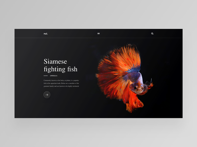 Siamese fighting fish animal national geographic fighting fish daily design ux ui web